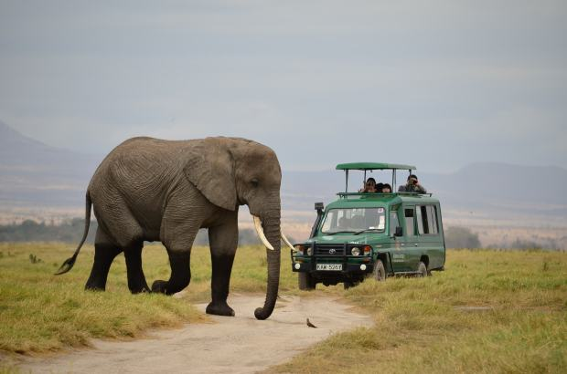 Elephants have right of way